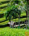 Letalske karte Denpasar/Bali za 623 EUR