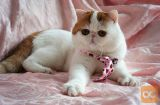 mačka za sprejetje