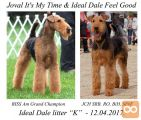 Airedalski terier - Airedale terrier