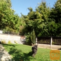 Rodovniški Neapeljski mastif