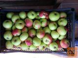 Jabolka Sorta Carjevič prodam tel 041 641 067