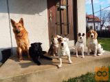 Sprehajanje psov