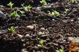 Zemlja za vrtnarjenje